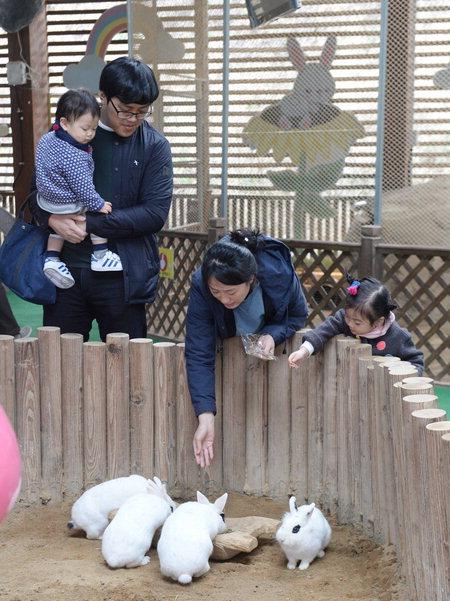 ▲ 창녕군 이방면 산토끼 노래동산을 찾은 가족단위 관람객들이 아이들과 함께 토끼에게 먹이를 주며 즐거운 시간을 보내는 모습. /경남도민일보 DB