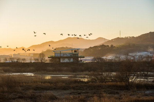 ▲ 화포천 저녁 하늘을 날아가는 새들.  /김해시